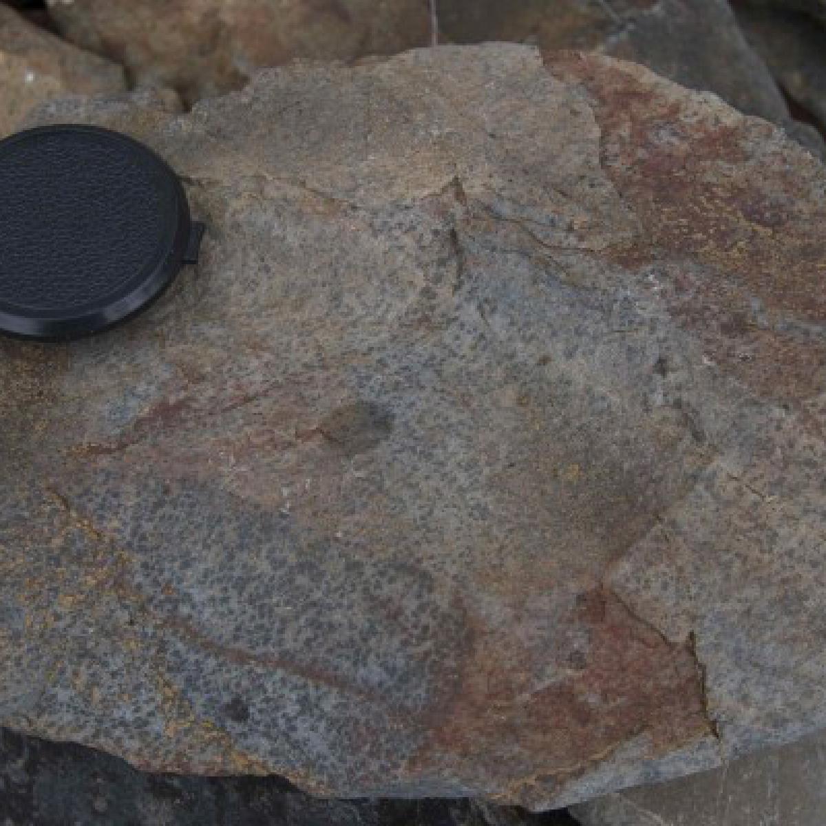 008 Spotted cordierite hornfels