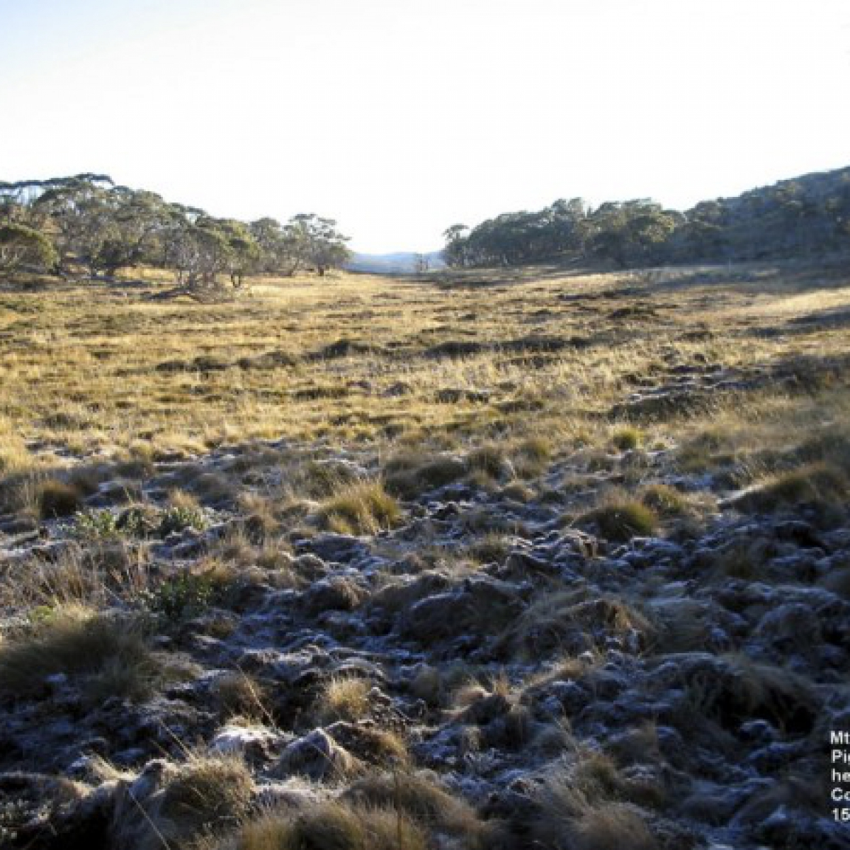 Headwaters of the Cotter River - Mt Scabby