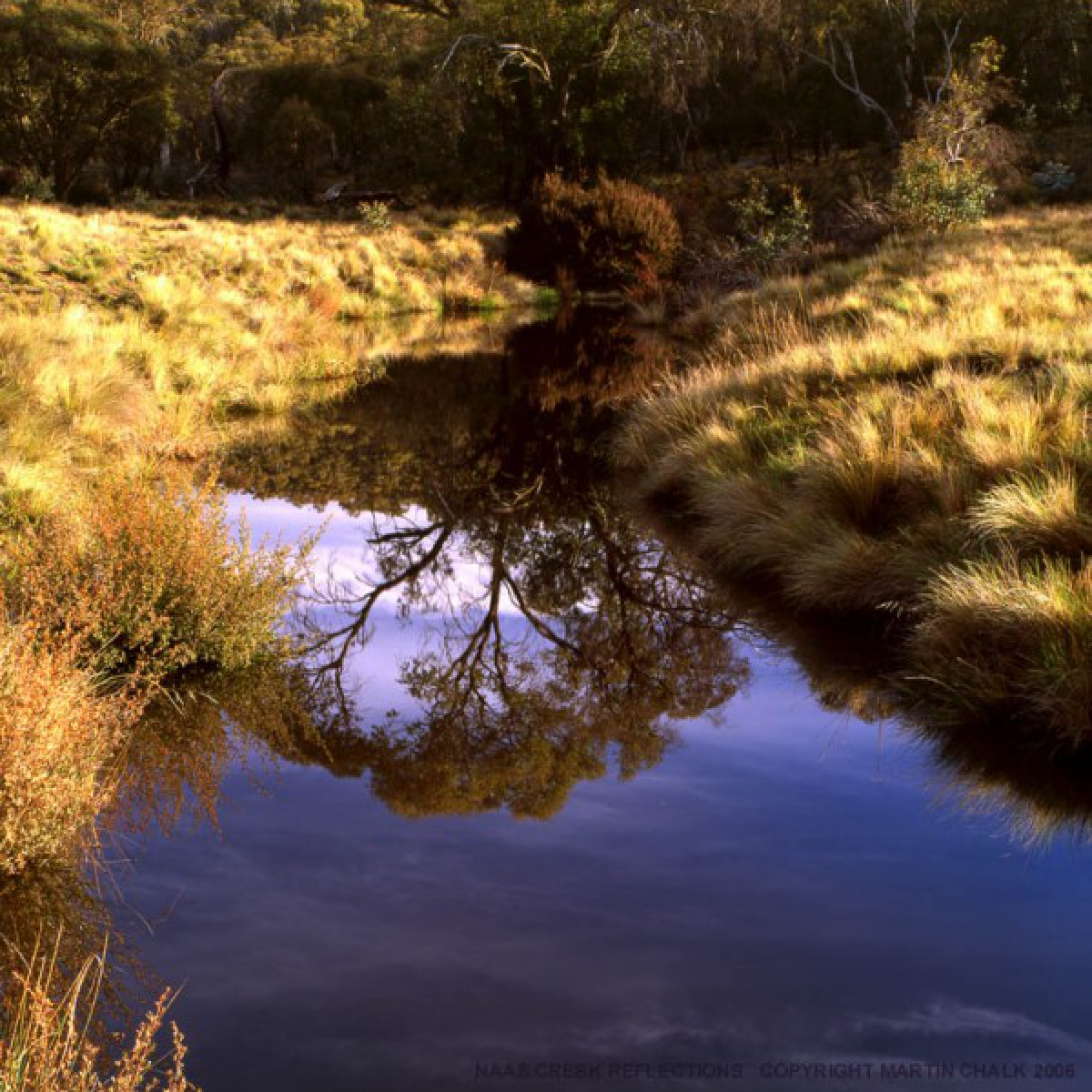 Naas Creek Reflections