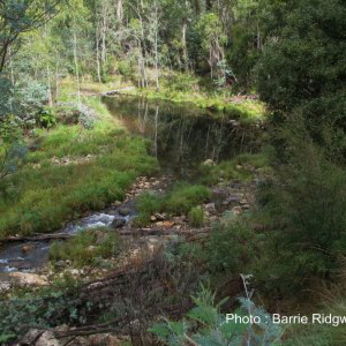 Cotter River below Bendora#1