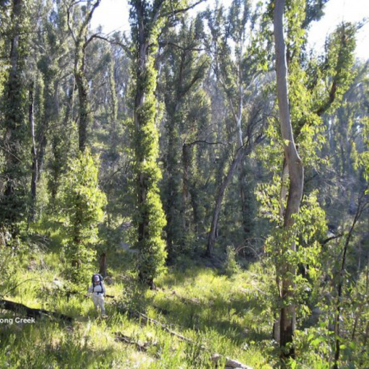 Judith on Bogong Creek - descending from Mt Gudgenby