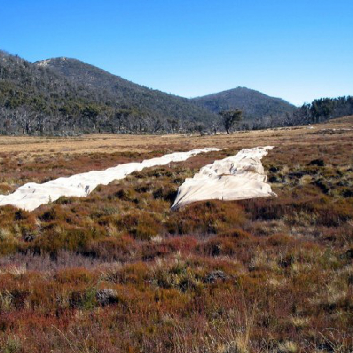 Sphagnum Recovery - Rotten Swamp, Namadgi NP - May 2006