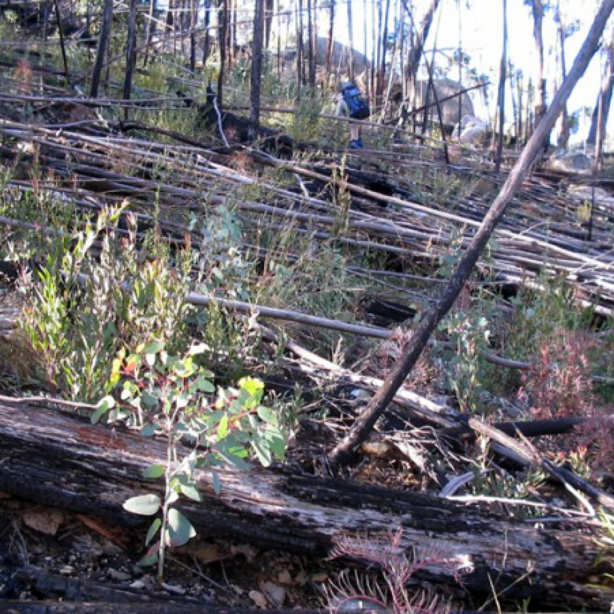 A walking challenge - the slopes of Mount Burbidge, Namadgi NP - May 2006