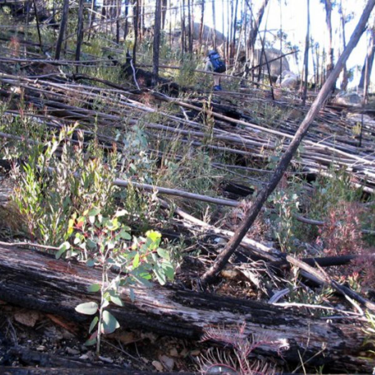 A walking challenge - the slopes of Mount Burbidge, Namadgi NP - May 2006
