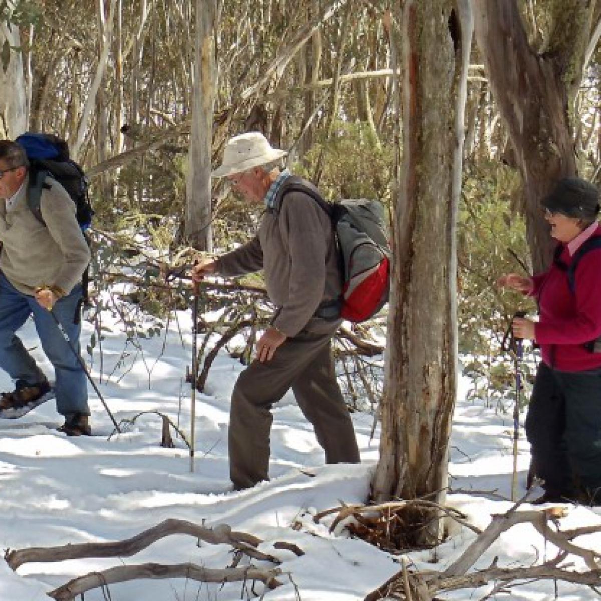 Mt Nungar walk