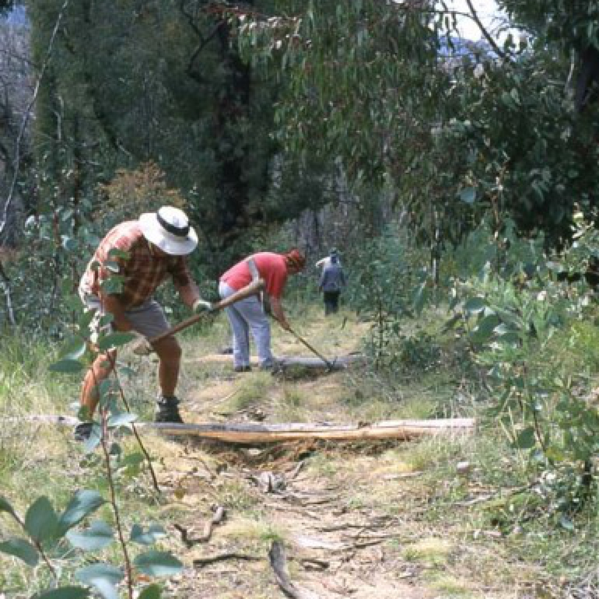 Alpine Walking Track repair