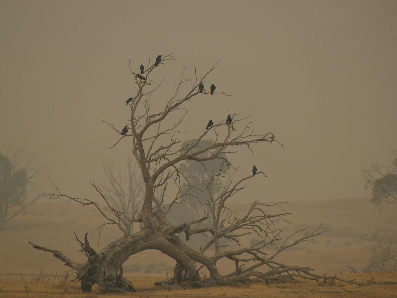 1-first-prize-a-murder-of-crows-by-joel-davis925CE0DC-EDDD-7A13-4926-BB60D453E2B2.jpg