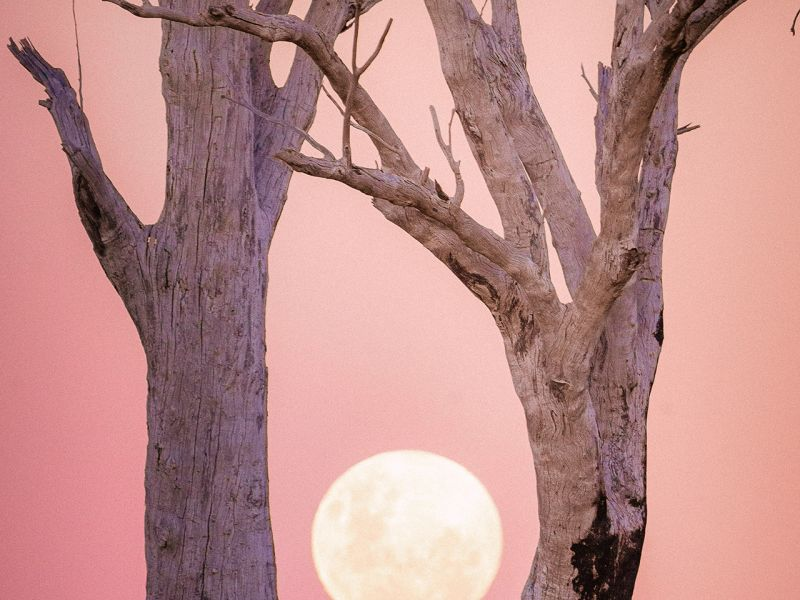1-first-prize-lunar-skeleton-trees-by-ritchie-southern7E4D83A7-E7DF-C1C6-1BB1-54E5D669DDD3.jpg