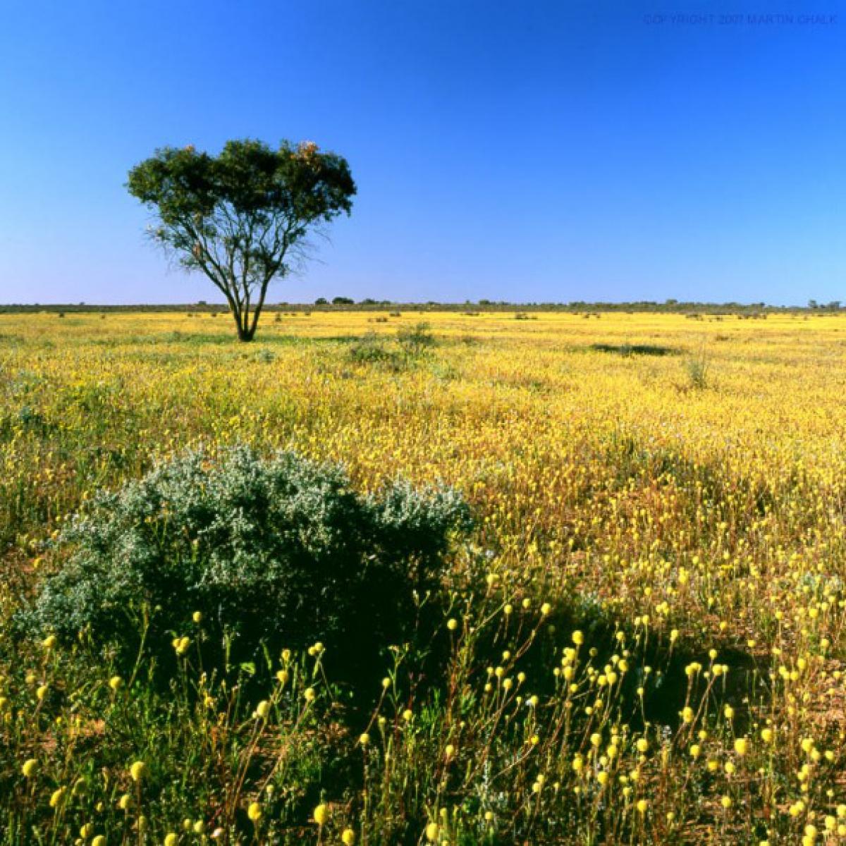 Paroo Overflow - Western NSW