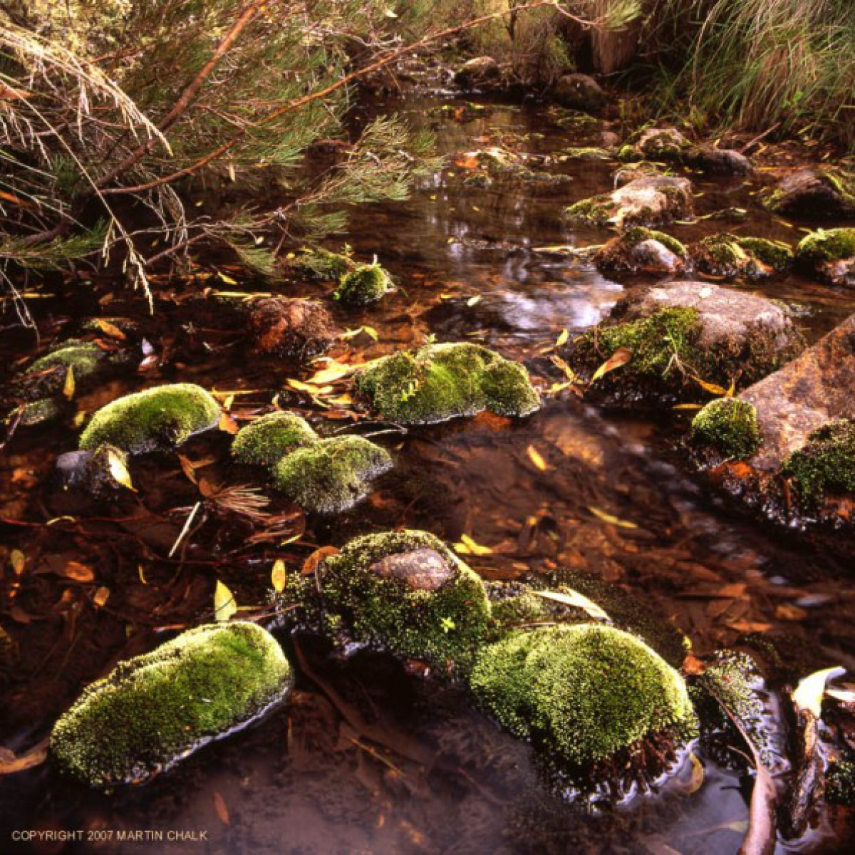 Headwaters of the Buchan River - Alpine National Park - Victoria