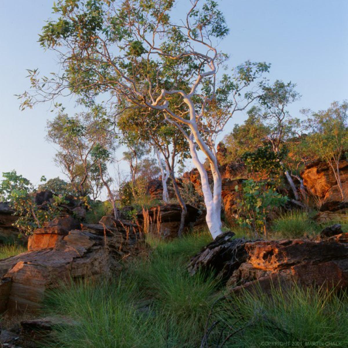 Ghost Gum - Mirima National Park - Western Australia