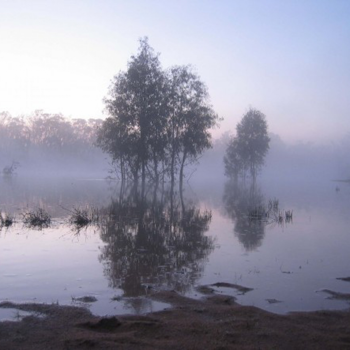 Morning mist on the Murray River, NSW