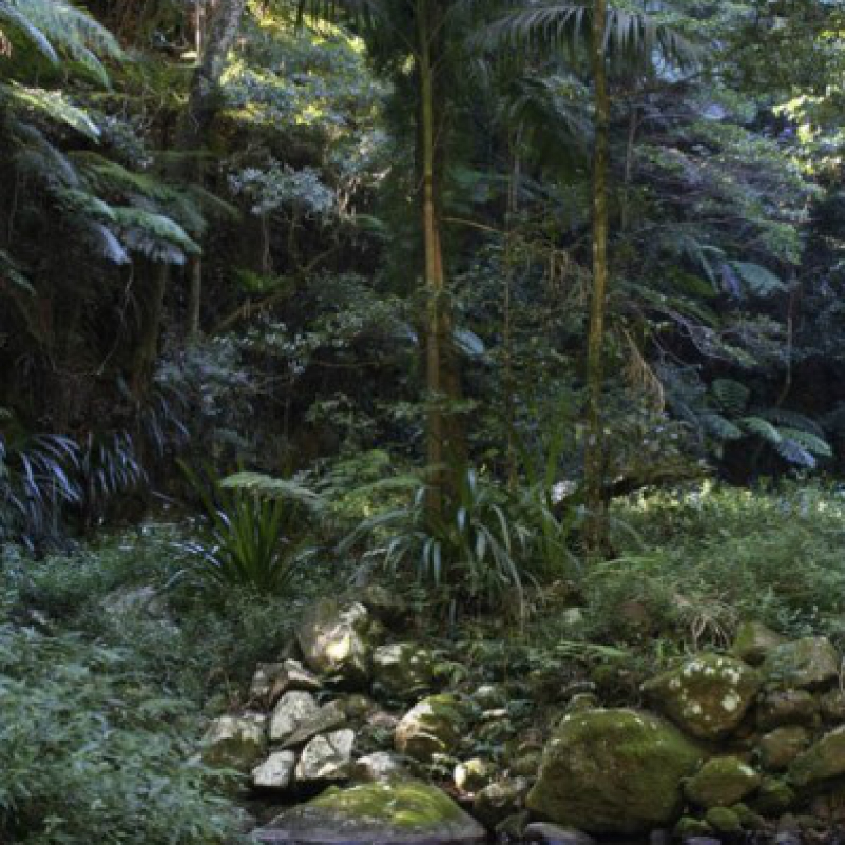 Rock pool on Running Creek - Lamington National Park, Queensland