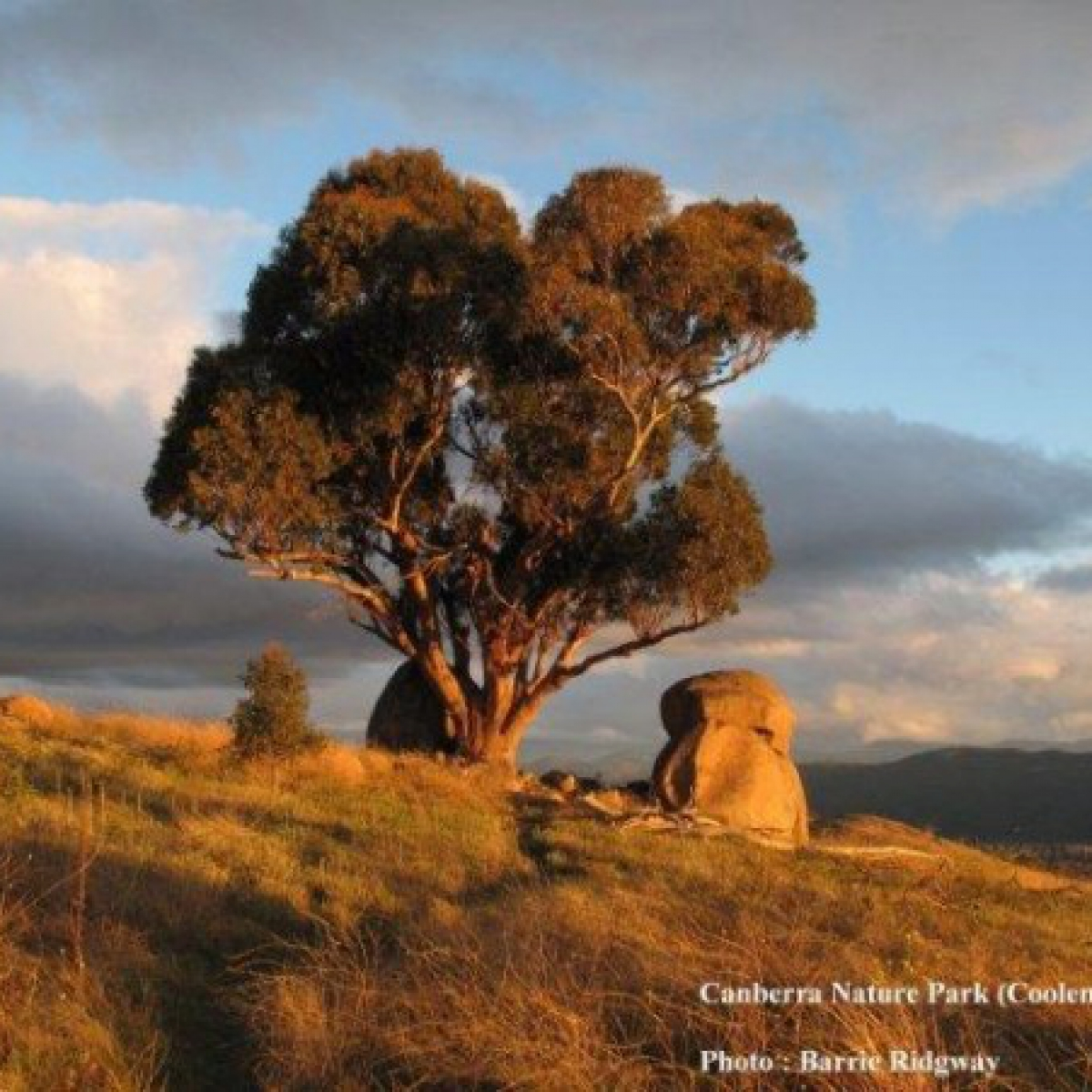 Cooleman Ridge in Canberra Nature Park